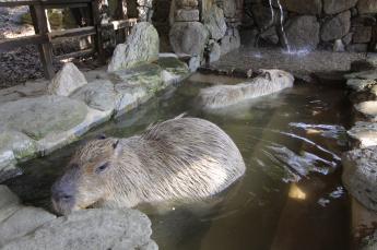 长崎野生动物园