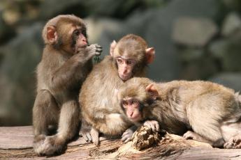 高崎山自然动物园