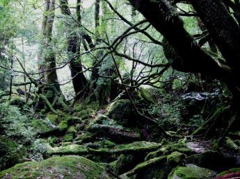 屋久岛自然体验