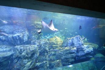 大分MARINEPALACE水族馆「海卵」