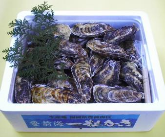 刈田町渔业合作社丰前海一粒牡蛎