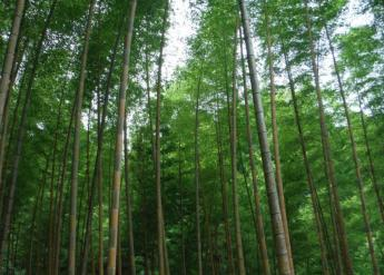 九州健行路线  久留米・高良山路线