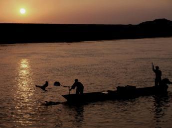 原鹤 夏天的风景线 鸬鹚捕鱼